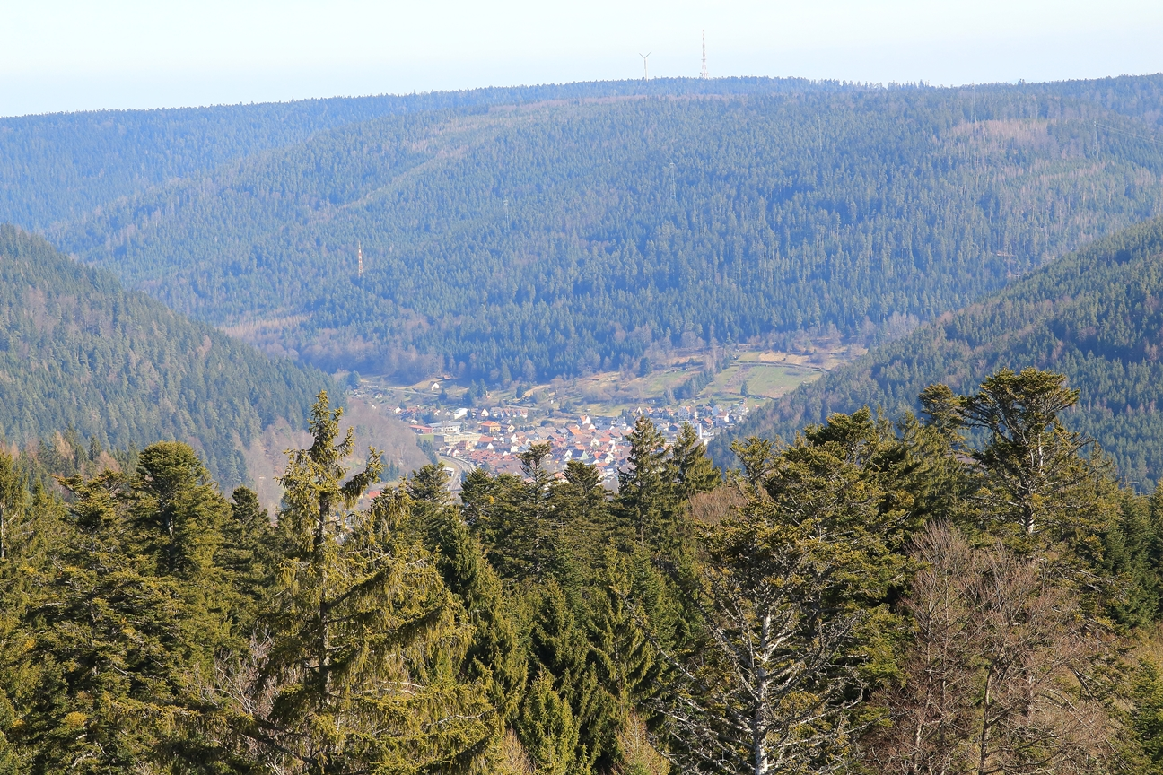 Blick vom Aussichtsturm Richtung Bad Wildbad