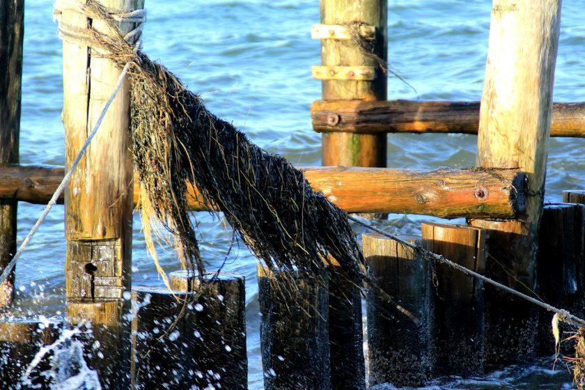 Algen im Wind Zingst Ostsee