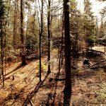 Blick vom Baumwipfelpfad in den Wald