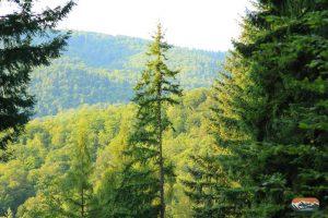 Wald Berg Odenwald