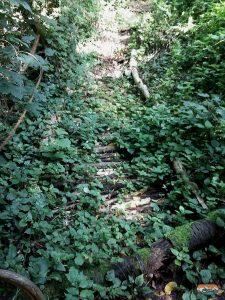 Barfußpfad Wald