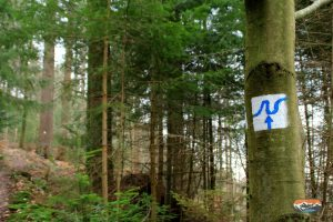 Neckarsteig Symbol an Baum