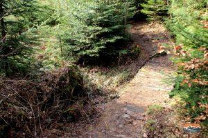 Bruecke Abenteuerwald