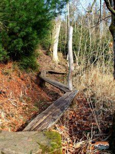 Steg im Abenteuerwald